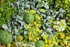 Artificial Vertical Gardens with Fake Plants on Walls. Stock Photos