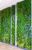 Artificial Vertical Gardens with Fake Plants on Walls. Royalty Free Stock Photos