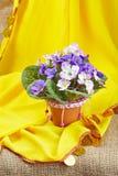 Artificial violet in ceramic pots Stock Photos