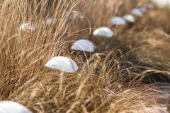 Artificial white mushrooms in a yellow grass, modern design royalty free stock photos