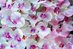 Artificial white and pink orchid flowers stock photos