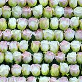 Artificial white and pink roses in a row seamless background Stock Image