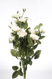 Artificial White Rose Royalty Free Stock Image