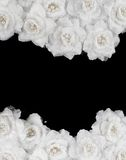 Artificial white roses background Stock Photos
