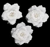 Artificial white roses isolated. Artificial white roses decoration elements isolated over black background, set of three Stock Photography