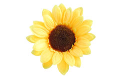 Artificial yellow sunflower. On white background Royalty Free Stock Image