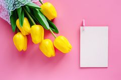 Artificial yellow tulips with white paper card on pink background. For nature decoration and springtime concept stock photography
