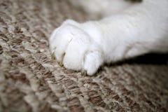 Artiglio del gatto Fotografia Stock