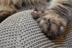 Artiglio del gatto nella mobilia Immagini Stock