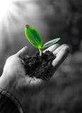 Artikel med ensamrätt - åkerbrukt begrepp, liten växt i hand Arkivbild