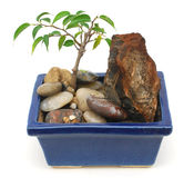 An arting bonsai tree. Decorative bonsai tree is in interior home Royalty Free Stock Photo