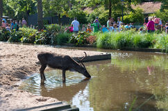 Artis zoo in amsterdam Royalty Free Stock Image
