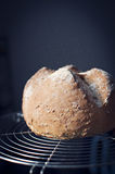 Artisan bread. Hot round artisan bread on metal grid Royalty Free Stock Photo
