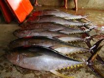 Yellowfin tuna Thunnus albacares freshly landed by the artisanal fishermen in Mindoro, Philippines. Artisanal Filipino fishermen use a variety of fishing gears Stock Photos