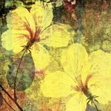 Artisitic hibiscus Stock Photo