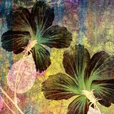 Artisitic hibiscus. Hibiscus in artistic design, retro style Stock Photo