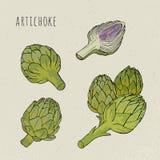 Artisjok vastgestelde hand getrokken botanisch geïsoleerde en kleurrijke schemainstallatie Schets vectorillustratie Stock Afbeelding