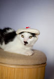 Artist cat with funny hat. Funny young cat wearing a hat and resting on a stool Royalty Free Stock Photography