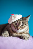 Artist cat with funny hat. Funny young cat wearing a hat and resting on a sofa Royalty Free Stock Photography