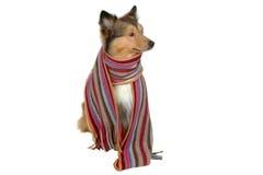 Artist dog Royalty Free Stock Photos