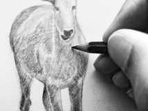 Artist drawing. Artist`s hand drawing an animal in black and white using a pencil. Overexposure and hard focus used for effect Stock Image