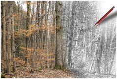 Artist pencil drawing of autumn forest trees and leaves. Canvas Royalty Free Stock Photos