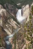 Artista Canyon, parque nacional de Yellowstone Imagens de Stock Royalty Free
