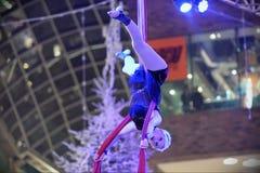 Artista de trapézio Fotografia de Stock Royalty Free
