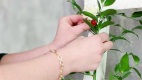 Artista floral que adorna las escaleras de madera blancas con las plantas verdes y las flores, idea de adornamiento de la planta almacen de metraje de vídeo