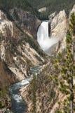 Artiste Canyon, parc national de Yellowstone Images libres de droits