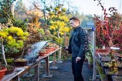 Artiste de bonsaïs de jeune homme arrosant ses arbres de bonsaïs photo libre de droits
