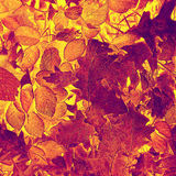 Artistic autumn leaves background Stock Photos