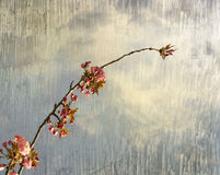 Artistic background Stock Images
