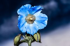 Artistic background for desktop wallpaper. Abstract macro photo with flower made in dark shade of blue. Artistic background for desktop wallpaper royalty free stock images