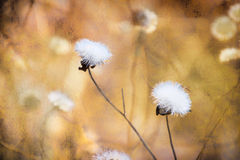 Artistic background of flowers Royalty Free Stock Photos
