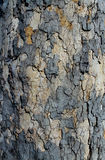 Artistic Bark Texture Stock Photography
