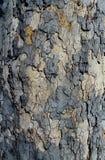 Artistic Bark Texture. Artistic Dark Bark Texture detail macro close up Stock Photography