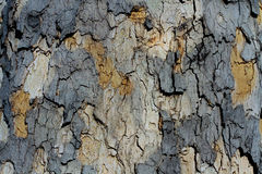 Artistic Bark Texture Royalty Free Stock Photo