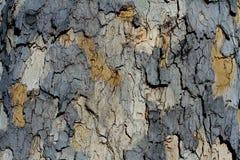 Artistic Bark Texture. Artistic Dark Bark Texture detail macro close up Royalty Free Stock Photo