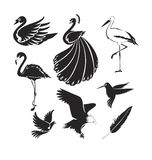 Artistic birds Royalty Free Stock Photography