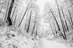 Artistic black and white photography. Winter landscape royalty free stock images