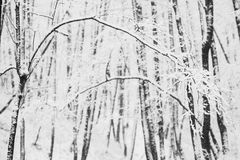 Artistic black and white photography. Winter landscape stock photos