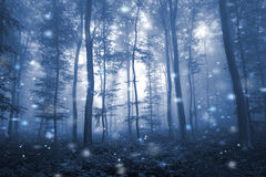 Artistic blue color foggy forest tree fairytale. Landscape with abstract fireflies Royalty Free Stock Photography