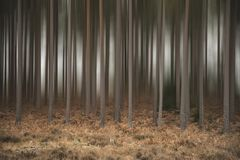 Artistic blur effect applied to pine tree forest Autumn Fall lan Stock Photos