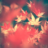 Artistic blurred yellow red sunny autumn leaves background Stock Images