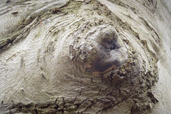 Artistic bulge of a beech tree looking like a closed eye. Netherlands, detail stock photo