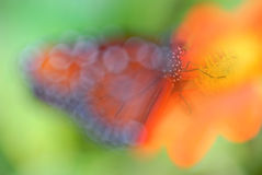 Artistic Butterfly Stock Image