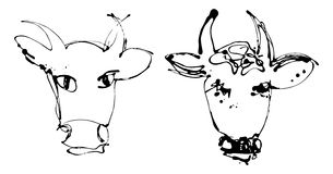 Artistic cow - version Royalty Free Stock Photo