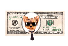 Artistic dollar bill with dog president Stock Image