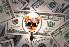 Artistic dollar bill with dog president Stock Photography